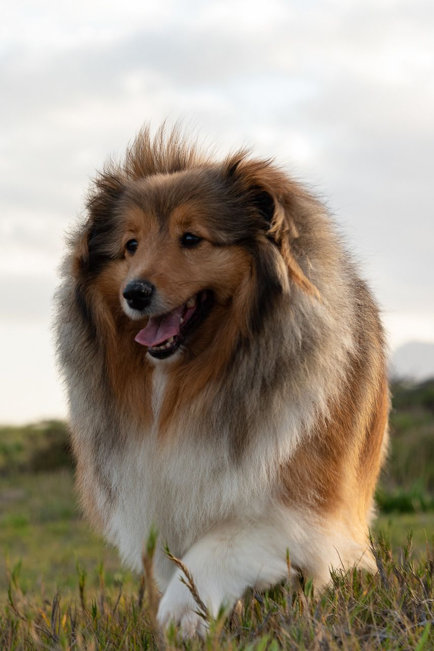 The Smartest Dog Breeds Could Ace Any Quiz In 2020 Smartest Dog Breeds Dog Breeds Breeds