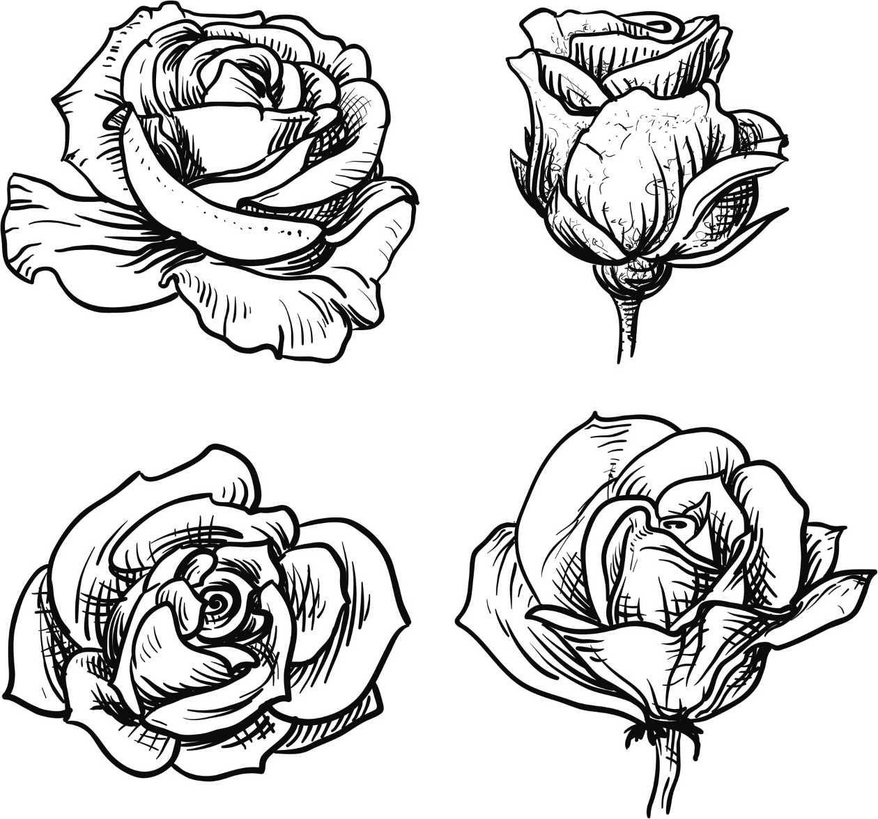 Flower Dibujo: Dibujos De Rosas Para Colorear