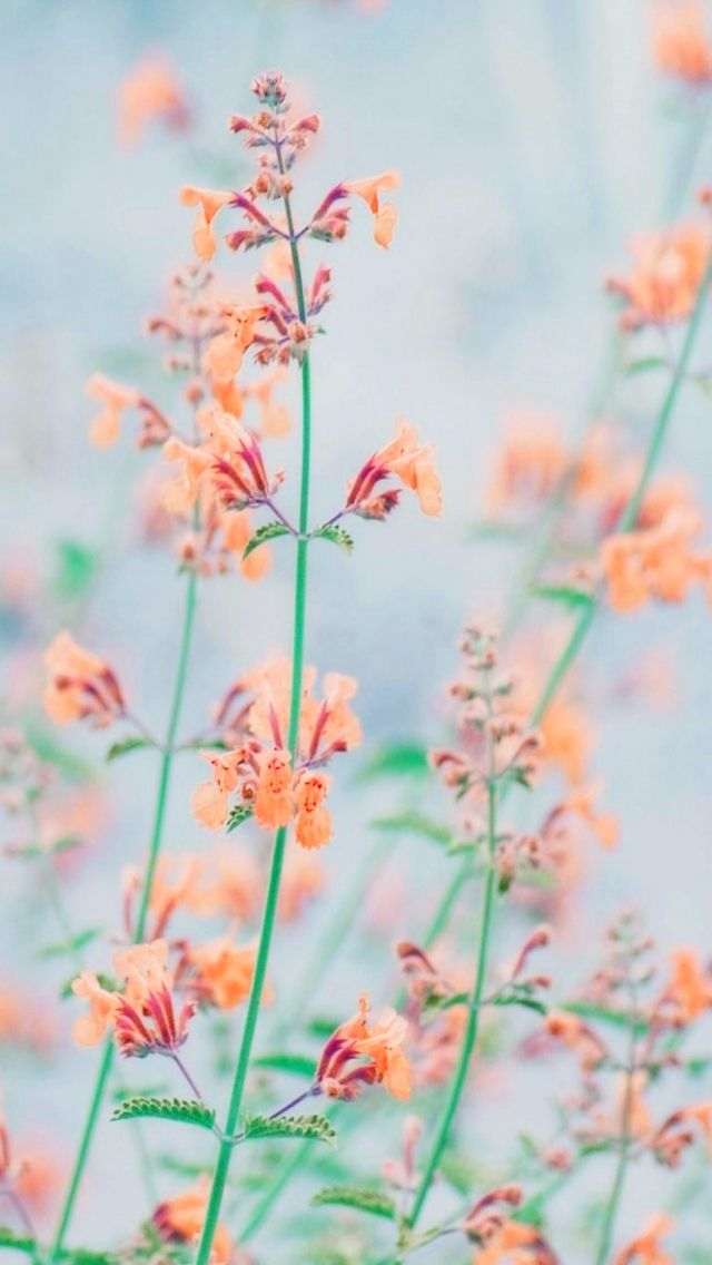 Orange Flowers Nature Iphone Wallpapers Tap To See More
