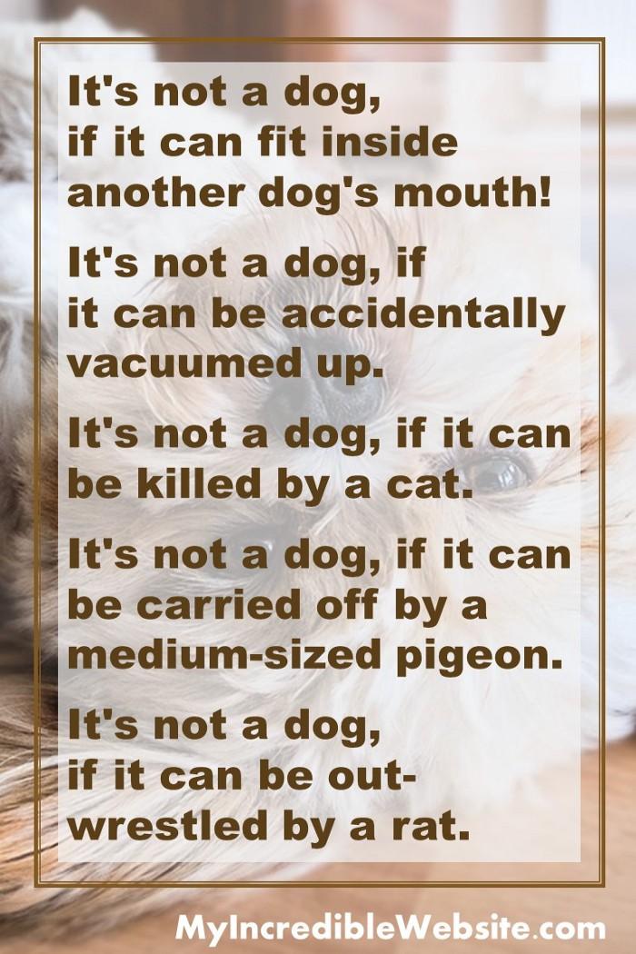 Funny Dog Jokes And More Dog Jokes Funny Dog Jokes Funny Dogs
