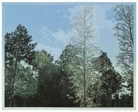 Grietje Postma.Houtsnede. woodcut. 2014. 40 x 50 cm.