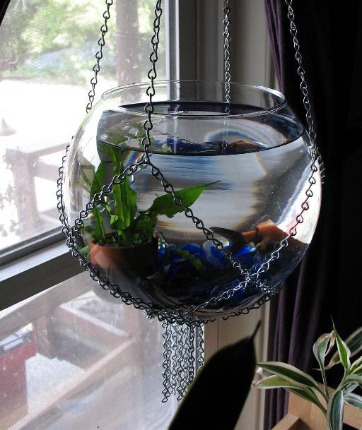 hanging fish bowl
