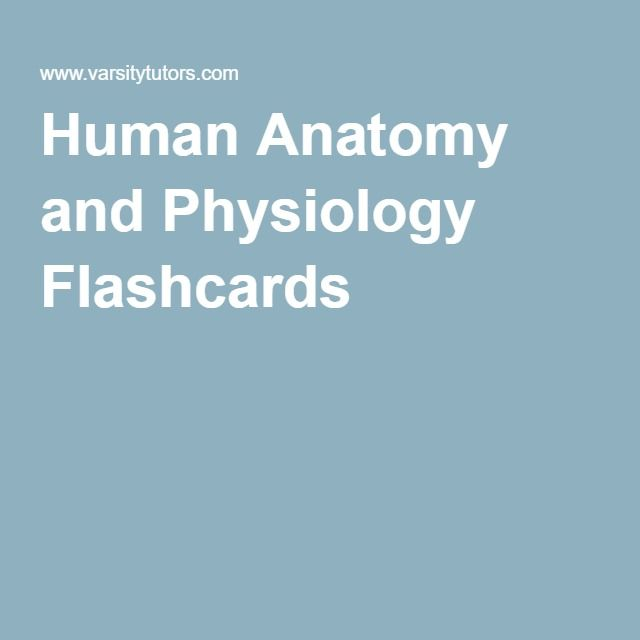 Human Anatomy and Physiology Flashcards | Anatomy & Physiology ...
