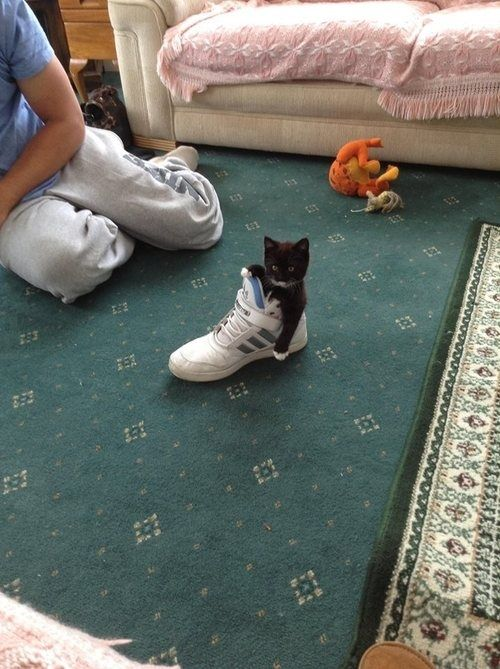 Sitting comfortably in a shoe.   The 29 Most Cat Things To Ever Happen