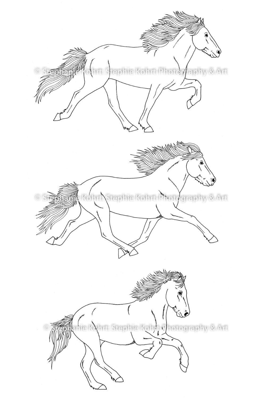Islandpferde Ausmalbilder Gangarten Ausmalbilder Islandpferde Pferd