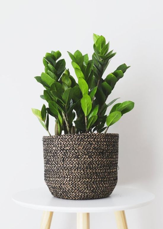 Here S Which Houseplant Should You Get Based On Your