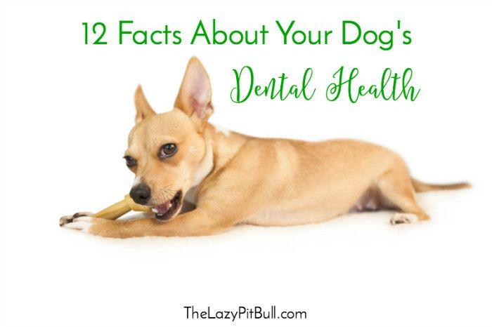 12 Fakten über die Zahngesundheit Ihres Hundes   – Pet Health, Wellness, & Safety