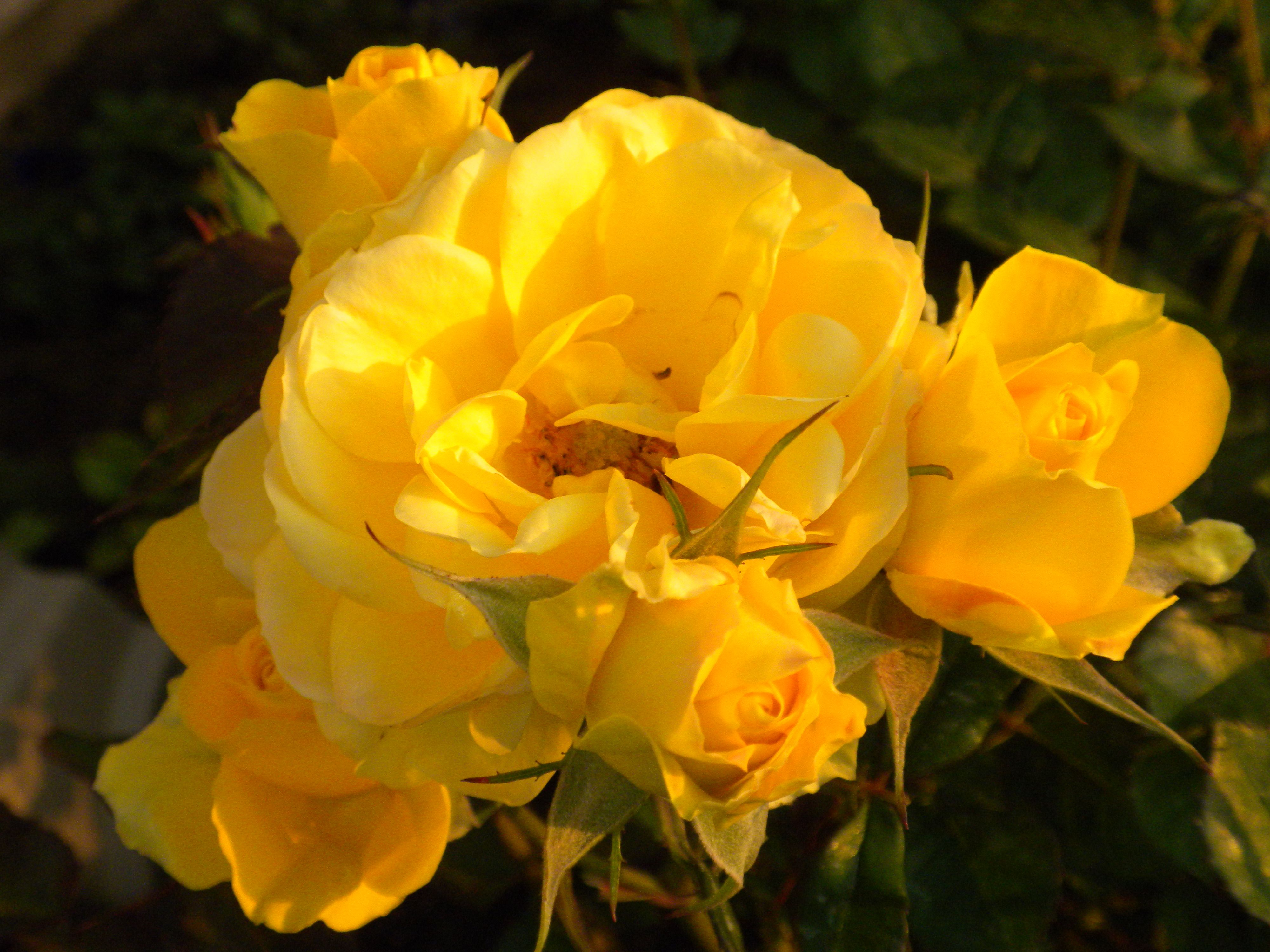 Yellow roses flowers and candles pinterest yellow roses and