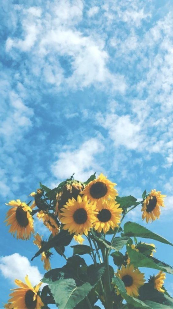 Pin By Delaney B On Wallpapers In 2020 With Images Sunflower Wallpaper Aesthetic Iphone Wallpaper Flower Wallpaper