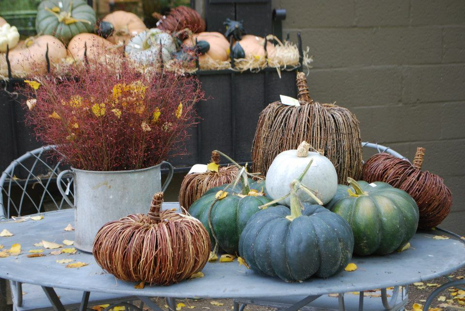 From the fall garden