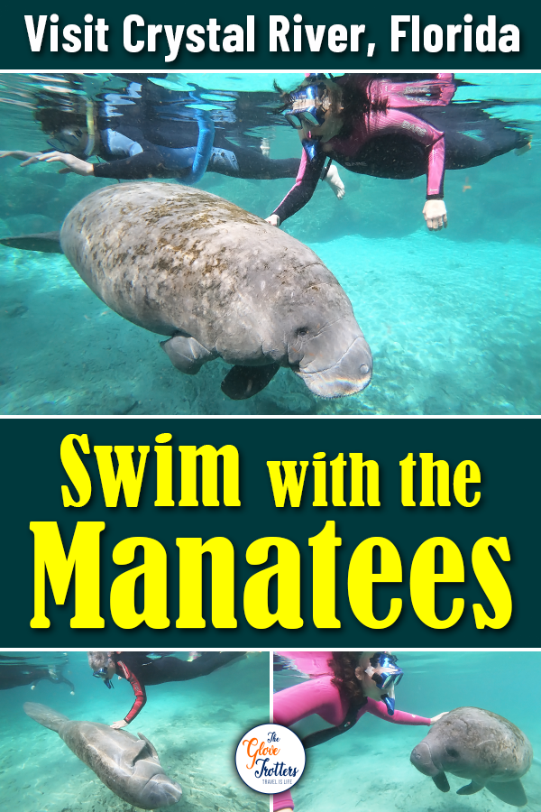 10 Tips on How to Swim with Manatees Crystal river