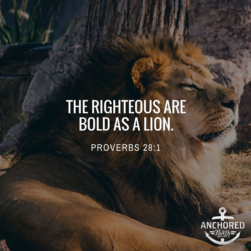 The righteous are bold as a lion. | Inspiring Bible Verses ...