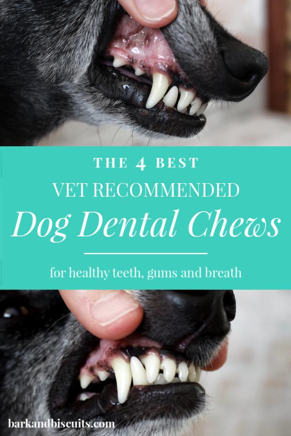 The 4 Best Vet Recommended Dog Dental Chews Dog Dental Chews
