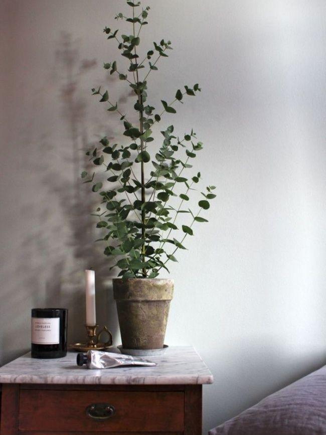 eucalyptus stille kracht in een coole plant green garden pinterest. Black Bedroom Furniture Sets. Home Design Ideas