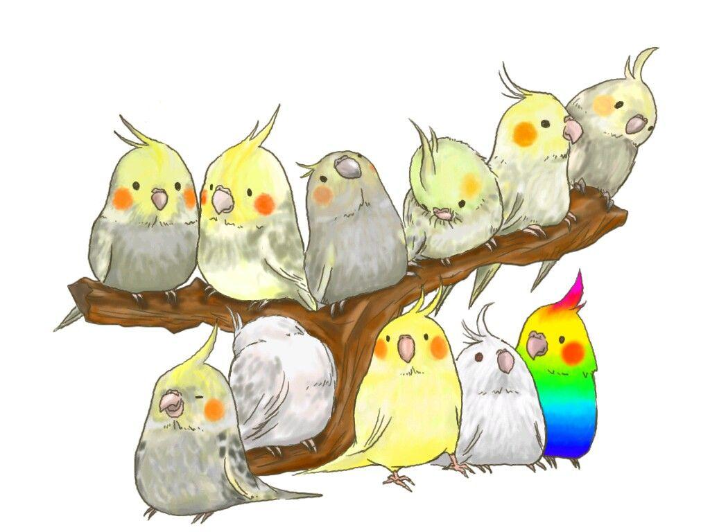 Картинках, рисунки смешных попугайчиков пачка