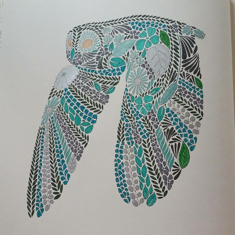Flying Owl From Millie Marottas Animal Kingdom Colouring