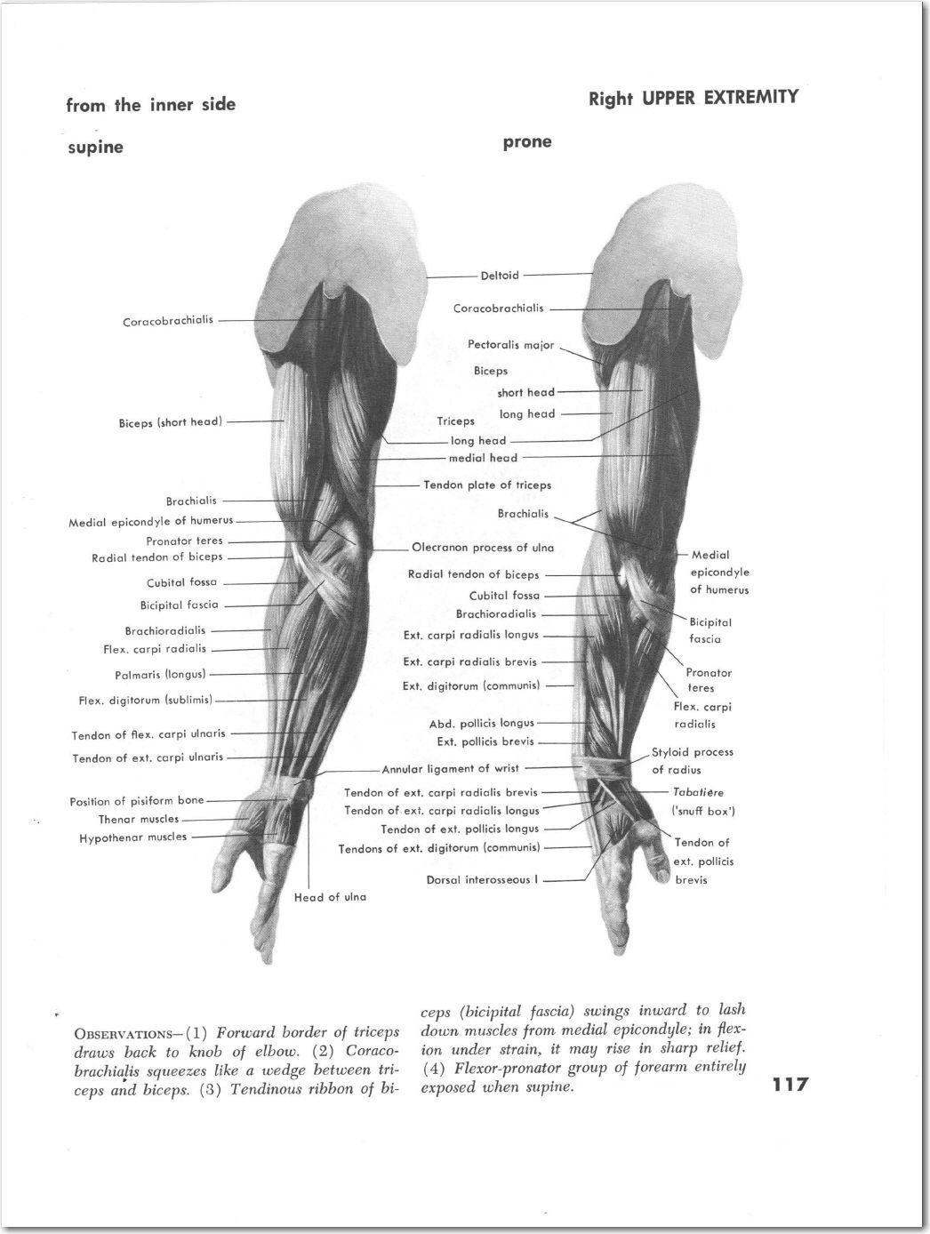 Pin de 동호 팽 en 인체   Pinterest   Brazos y Anatomía
