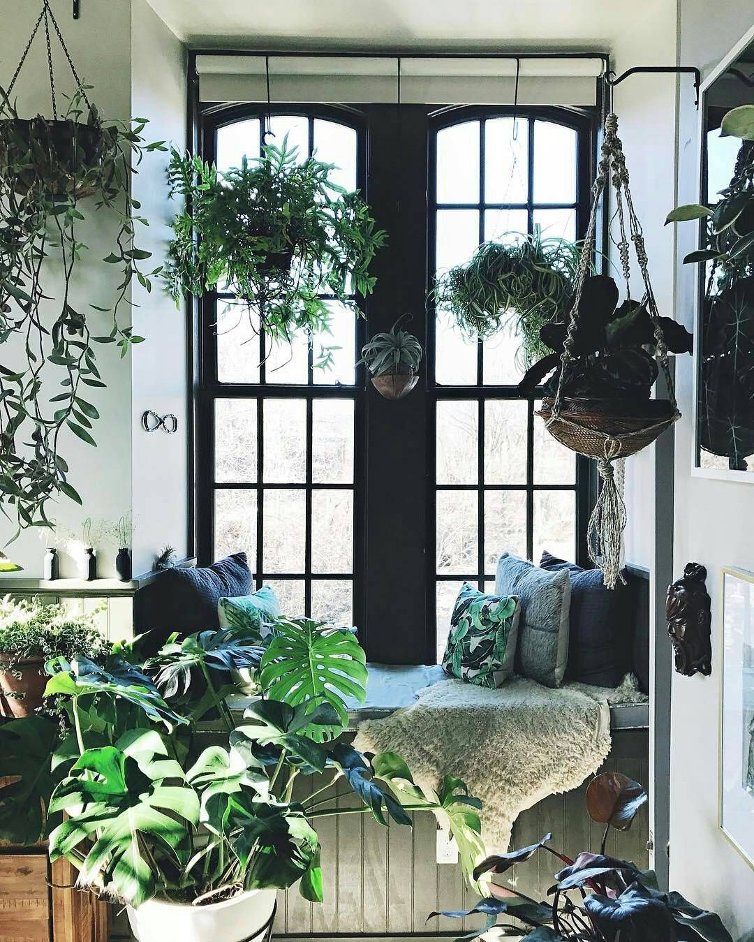 Indoor Apartment Plants: Window Seat...💚🌿☘🍃🌱
