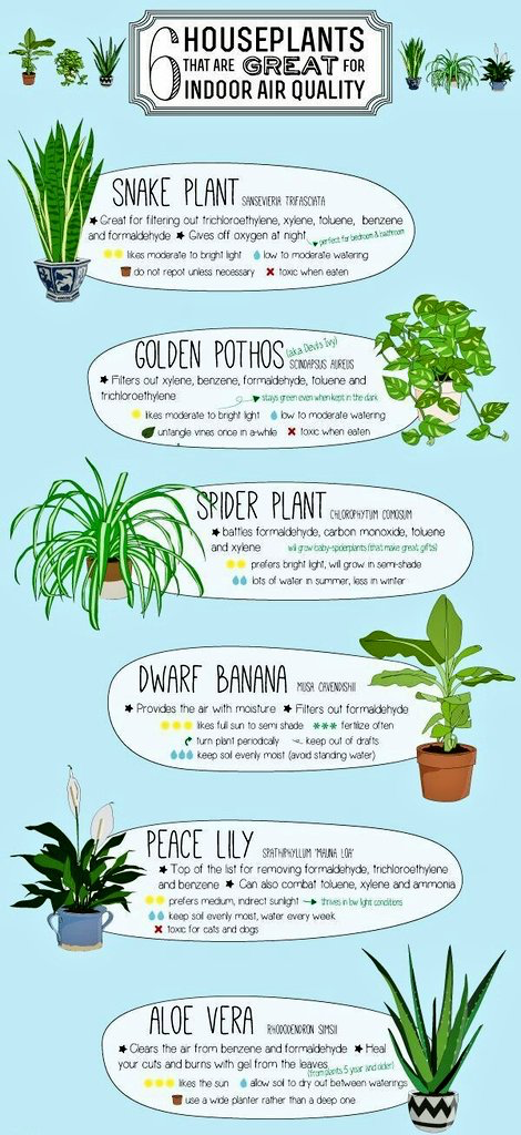Pin By Stephanie W On Life Things Plants Indoor Garden Indoor Plants