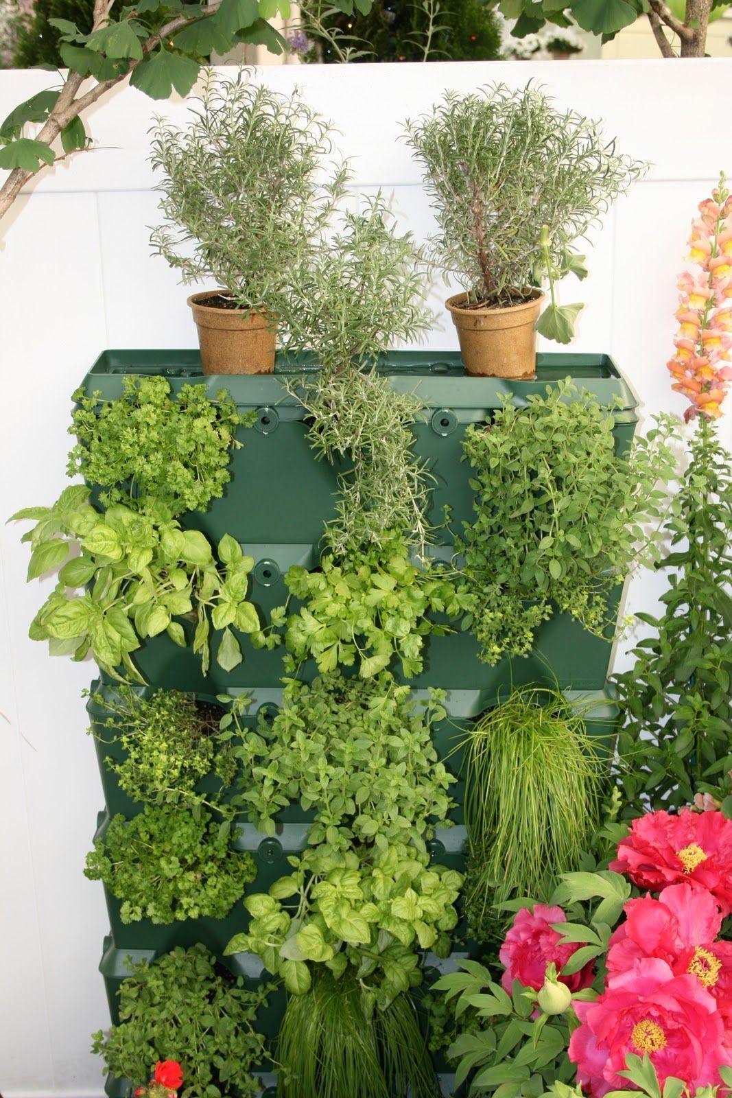 Garden Ideas Backyard Australian and Garden Boxes. in 2020 ...