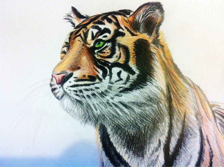 страна рисунки животные тигр это часть нижних