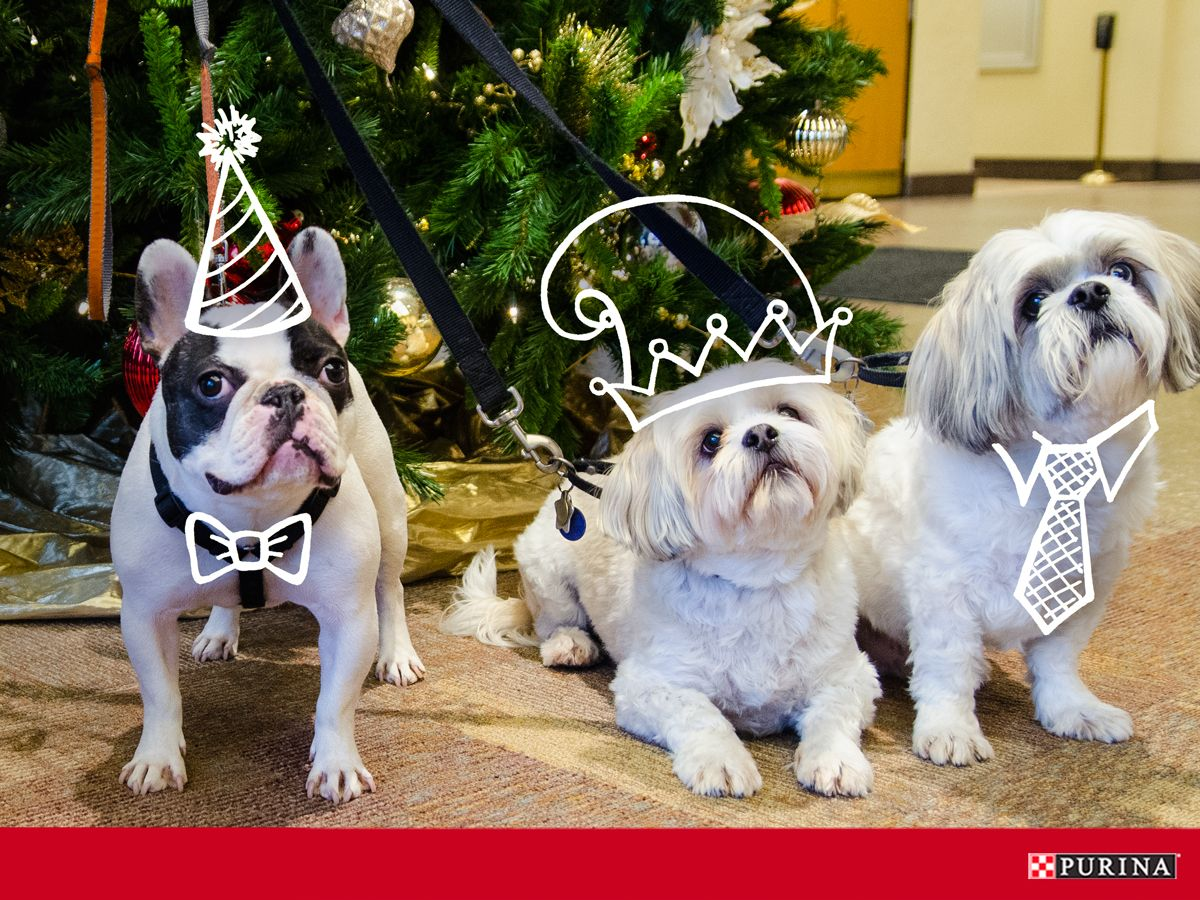 Notice Some New Faces At Your Office Holiday Party Make The Most Of The Holidays With Pets At Work Holiday Dog Pictures Dog Cat Dog Holiday