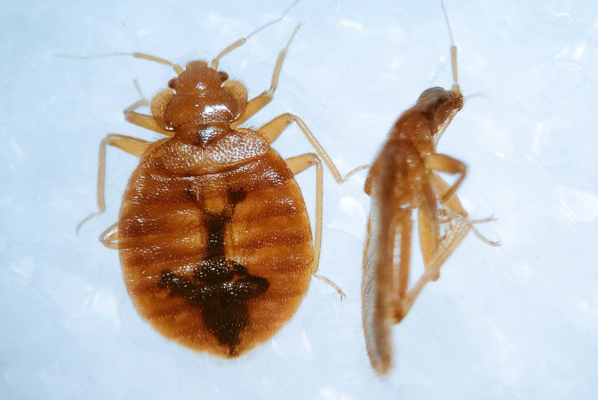 Jody Green on Twitter Bed bugs, Foraging, Hitchhiking