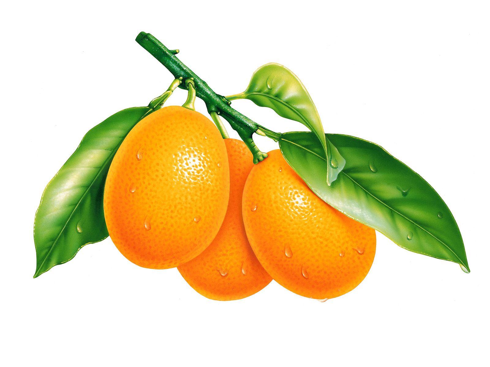 Or orange fruit hd wallpaper - Download Widescreen Lemon Fruit Hd Wallpaper Free