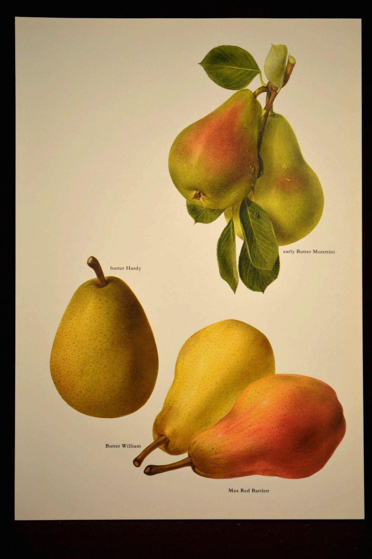 Pear Wall Art Decor Fruit Kitchen Pears