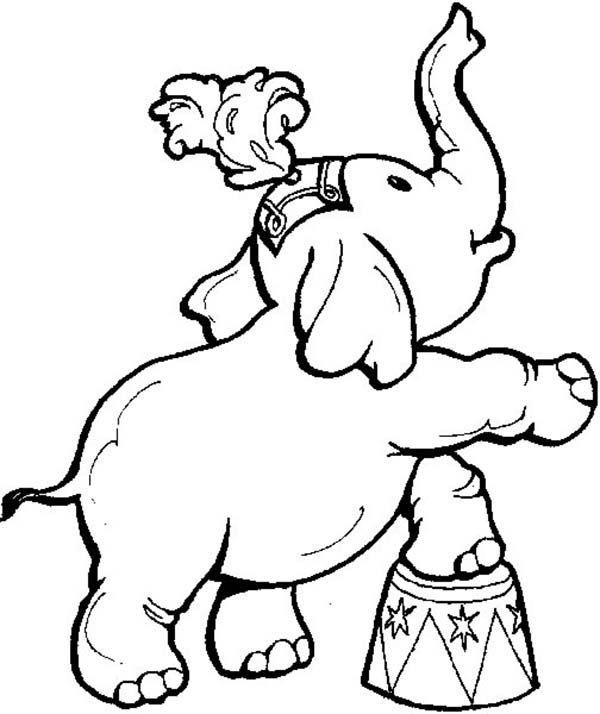 Circus Cute Little Elephant Circus Coloring Page Circus Theme
