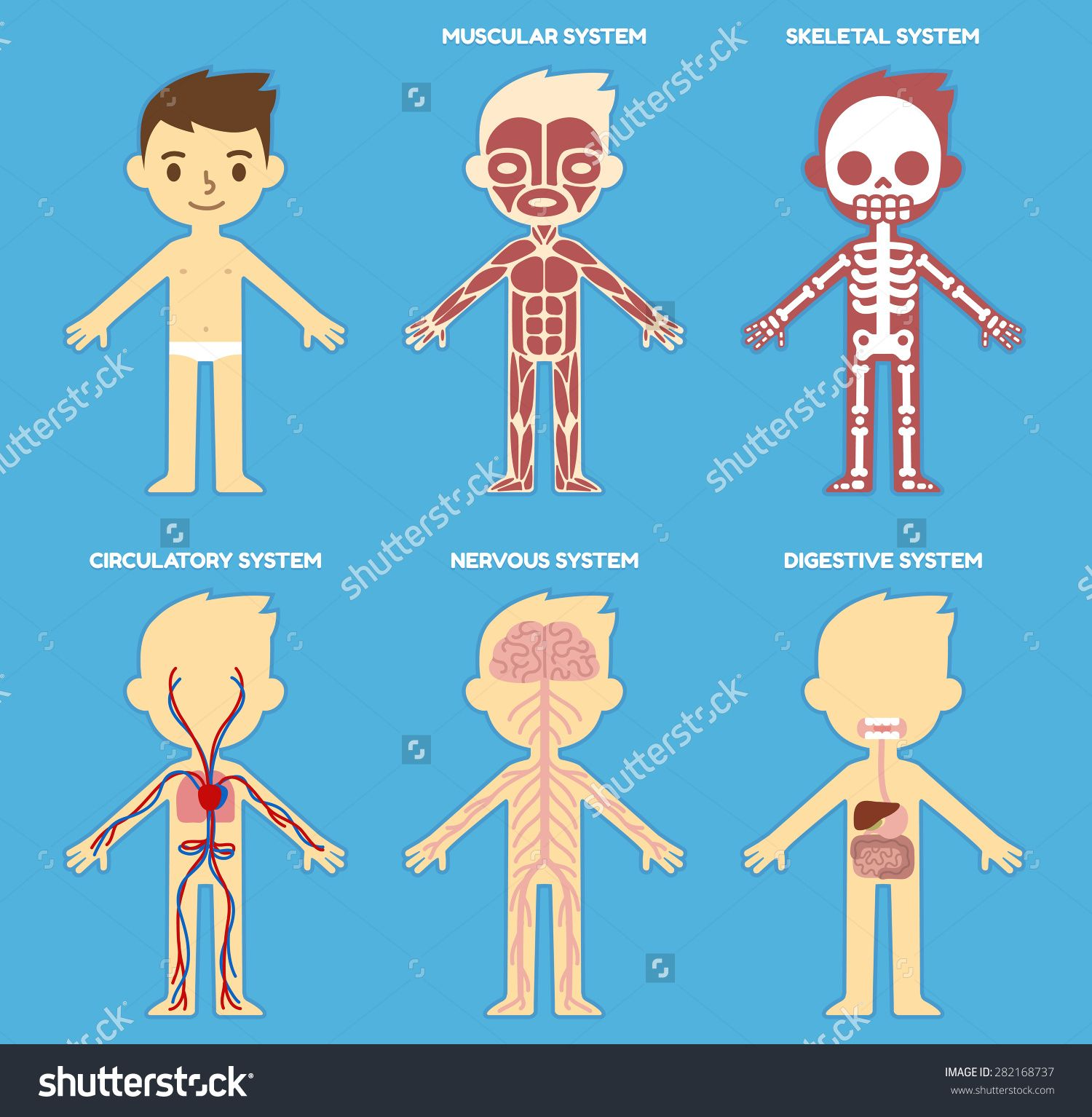 Body systems and functions for kids