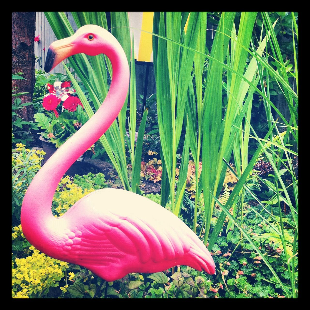 Spike, the watchflamingo, ever diligent.