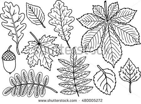 Hand Drawn Vector Coloring Page Black And White Autumn Leaves Coilection Isolated Element