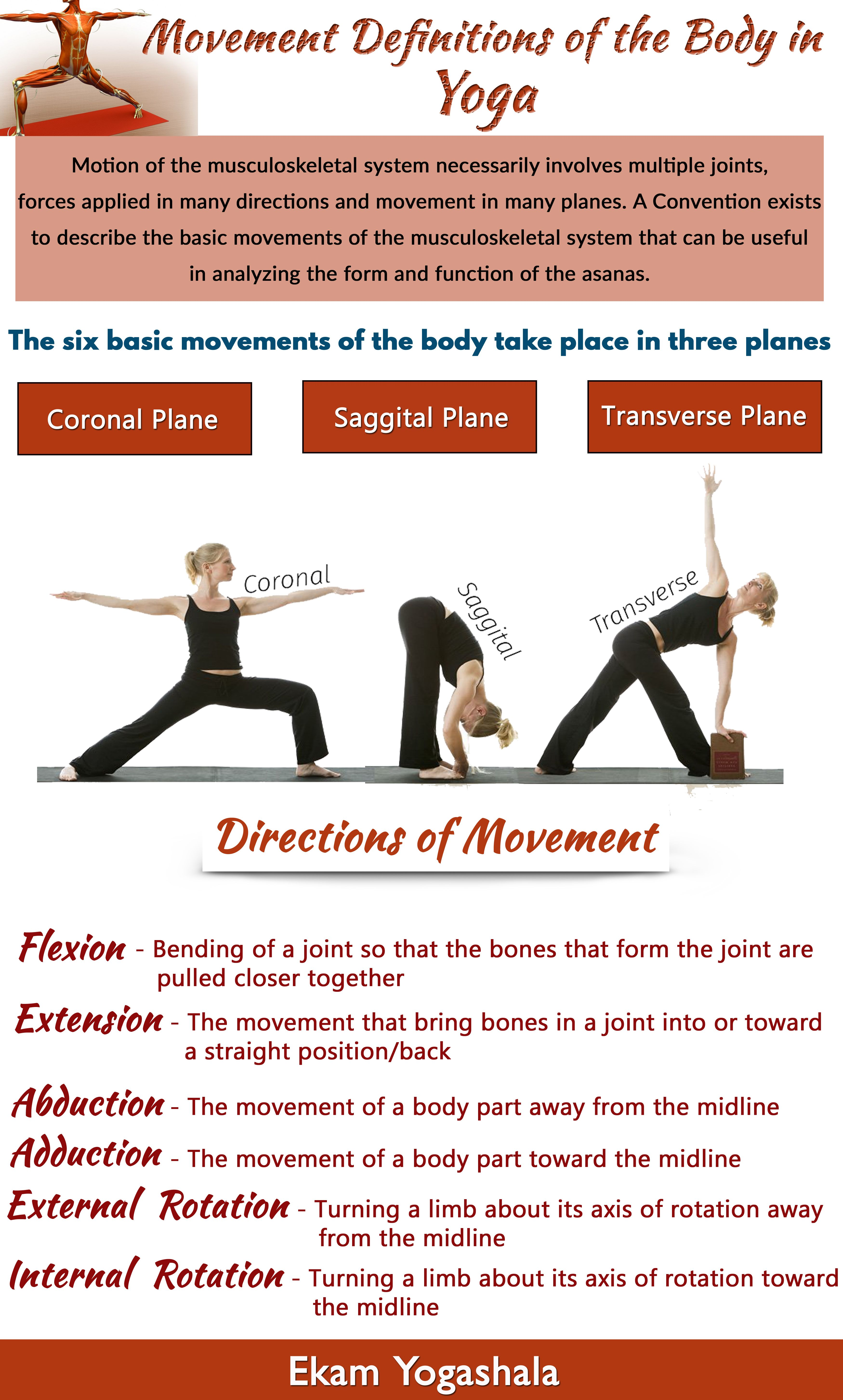 Movement Definitions - Anatomy of Movement in Yoga # ...