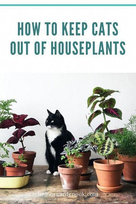 How To Keep Cats Out Of Houseplants in 2020   Cat safe ...