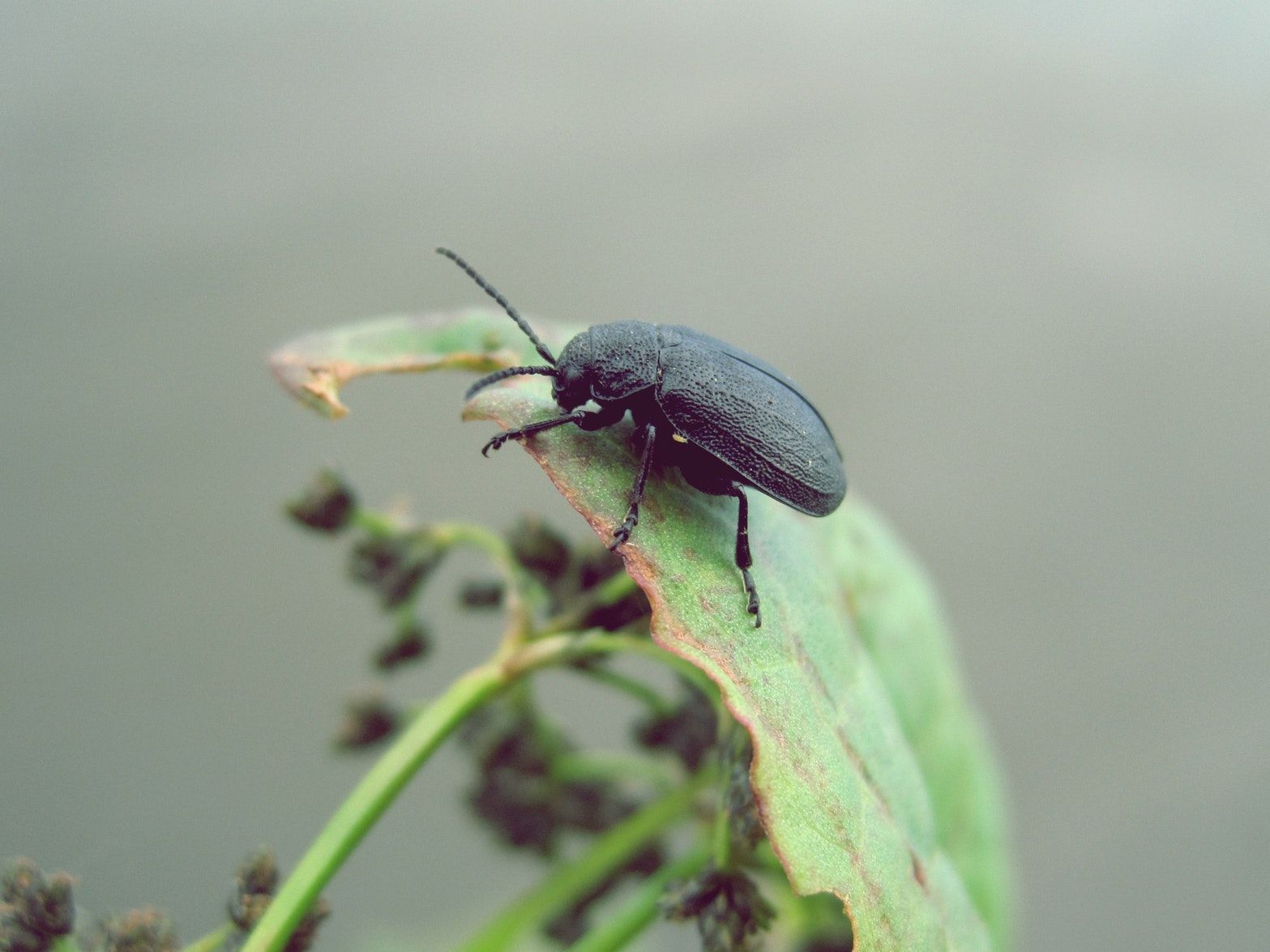 Facts About Bed Bugs Insect Photography Pet Safe Pictures Of