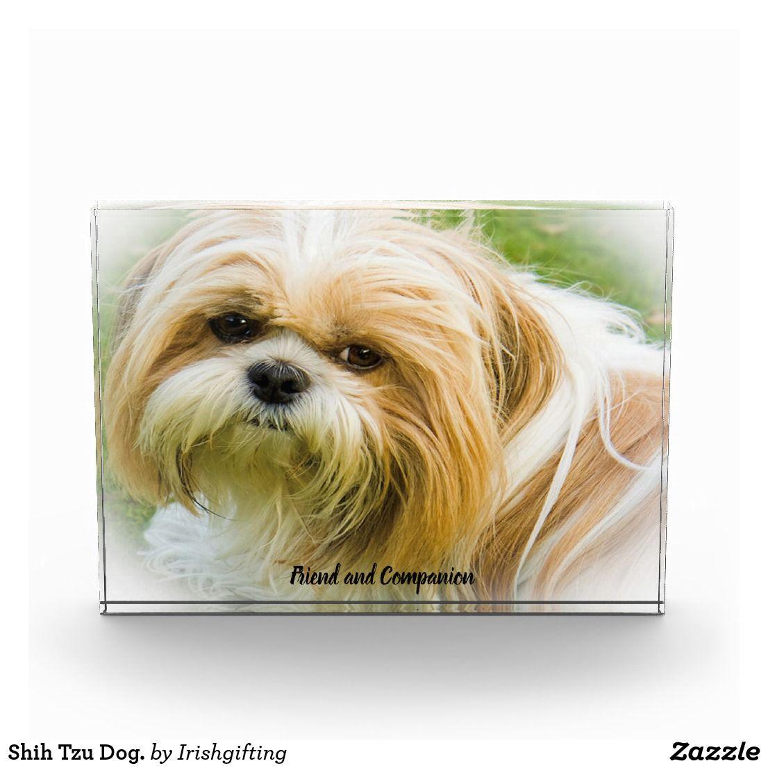 Shih Tzu Dog Photo Block Zazzle Co Uk Shih Tzu Dog Dog