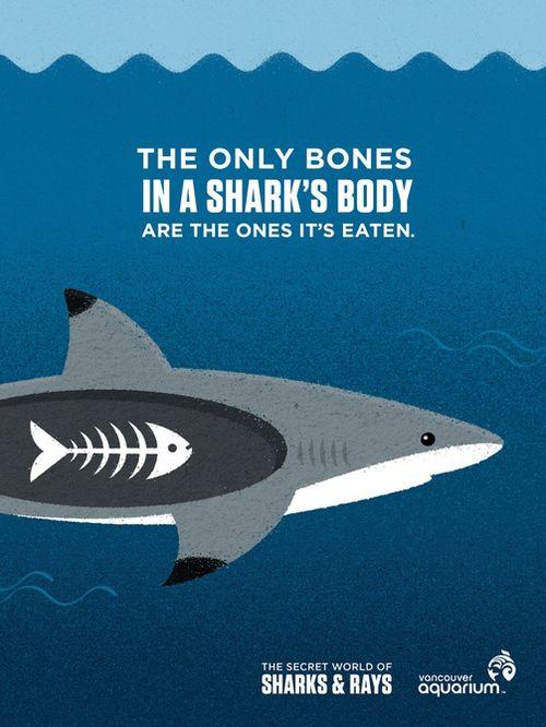 The Secret World of Sharks & Rays - Zara Picken