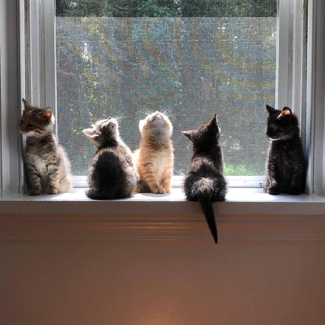 Perfekter Ort Von Veggiedayz Kittens Of World Und
