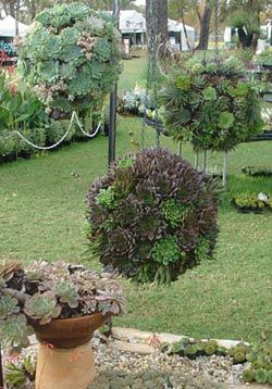 Hanging Succulent Balls Tutorial Avec Images Deco Jardin