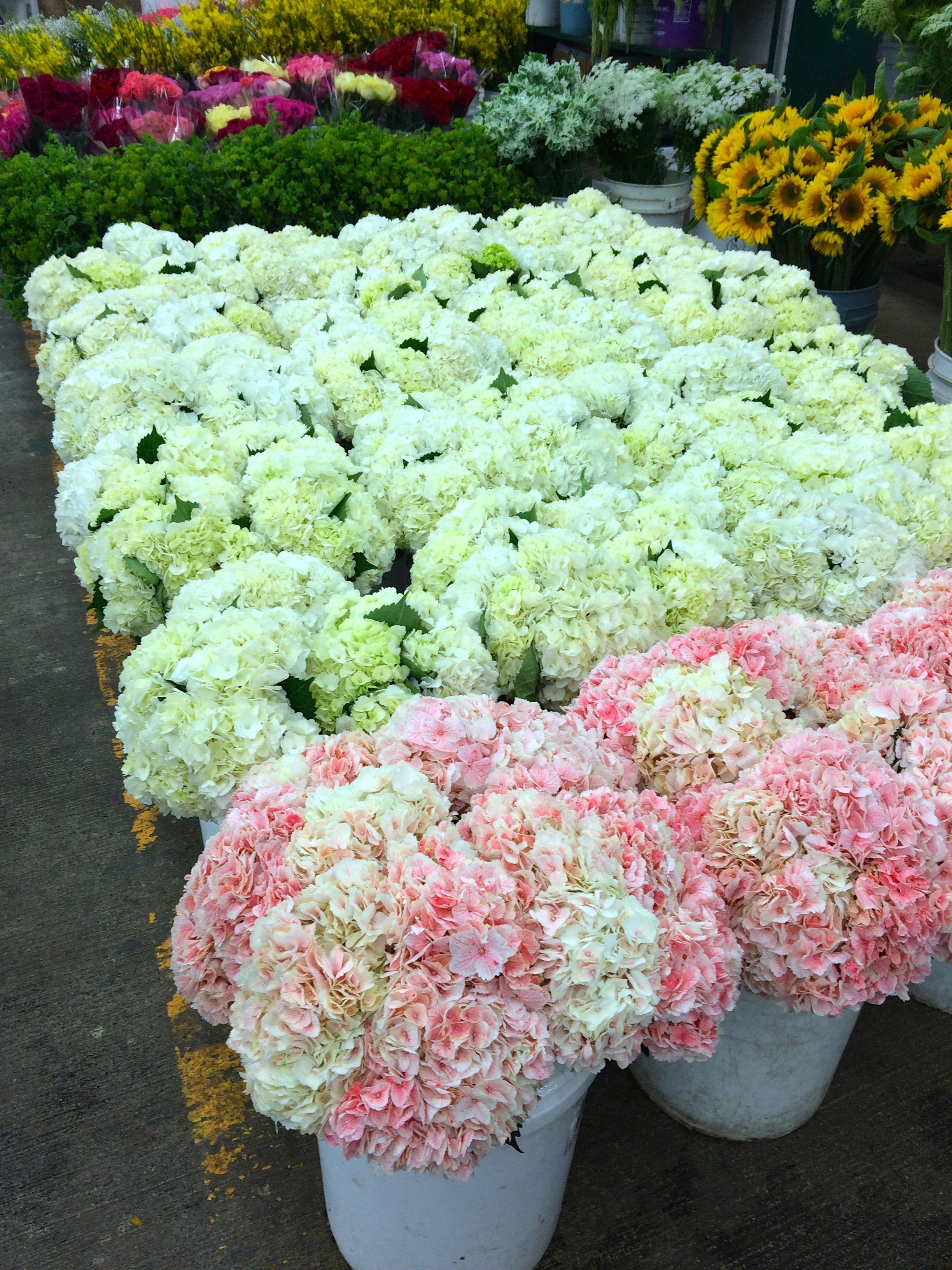 Pin By Original La Flower Market On Hydrangea Flowers Pink Champagne Wedding Hydrangea Flower Flower Market