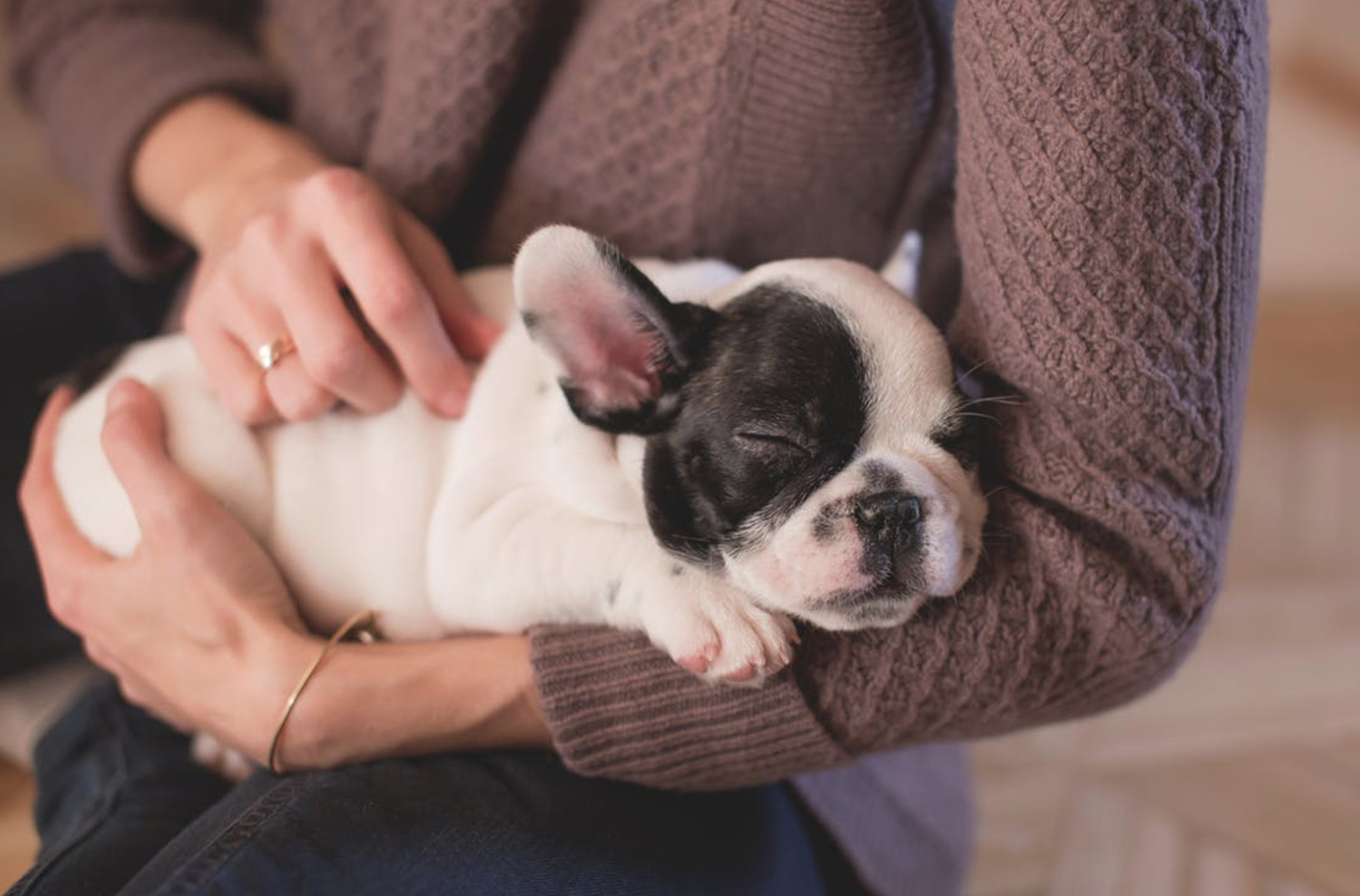 10 Things I Want My Dog To Know While I'm At College