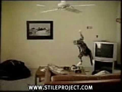 Funny Cat Stuck On Ceiling Fan Stupid Cat Cat Gif Cat Fails