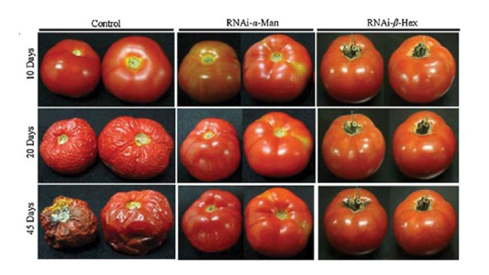 The Health Effects Of Gmo Foods Genetically Modified Food Gmo
