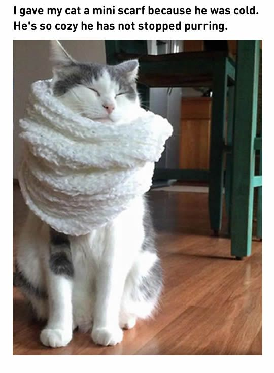 10 Fresh Cat Memes 1 Cat Watch It Keeps Telling You It S Nap Time Cute Animals Funny Animal Pictures Crazy Cats