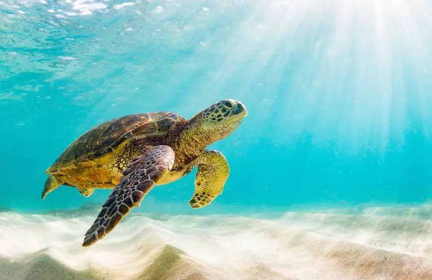 Pin By Eric Ovelgone On Turtle Habitat In 2020 Turtle Day World Turtle Day Green Sea Turtle