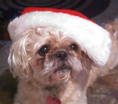 Sophie As Santa This Is Chi Chi Cousin Who Has Moved To