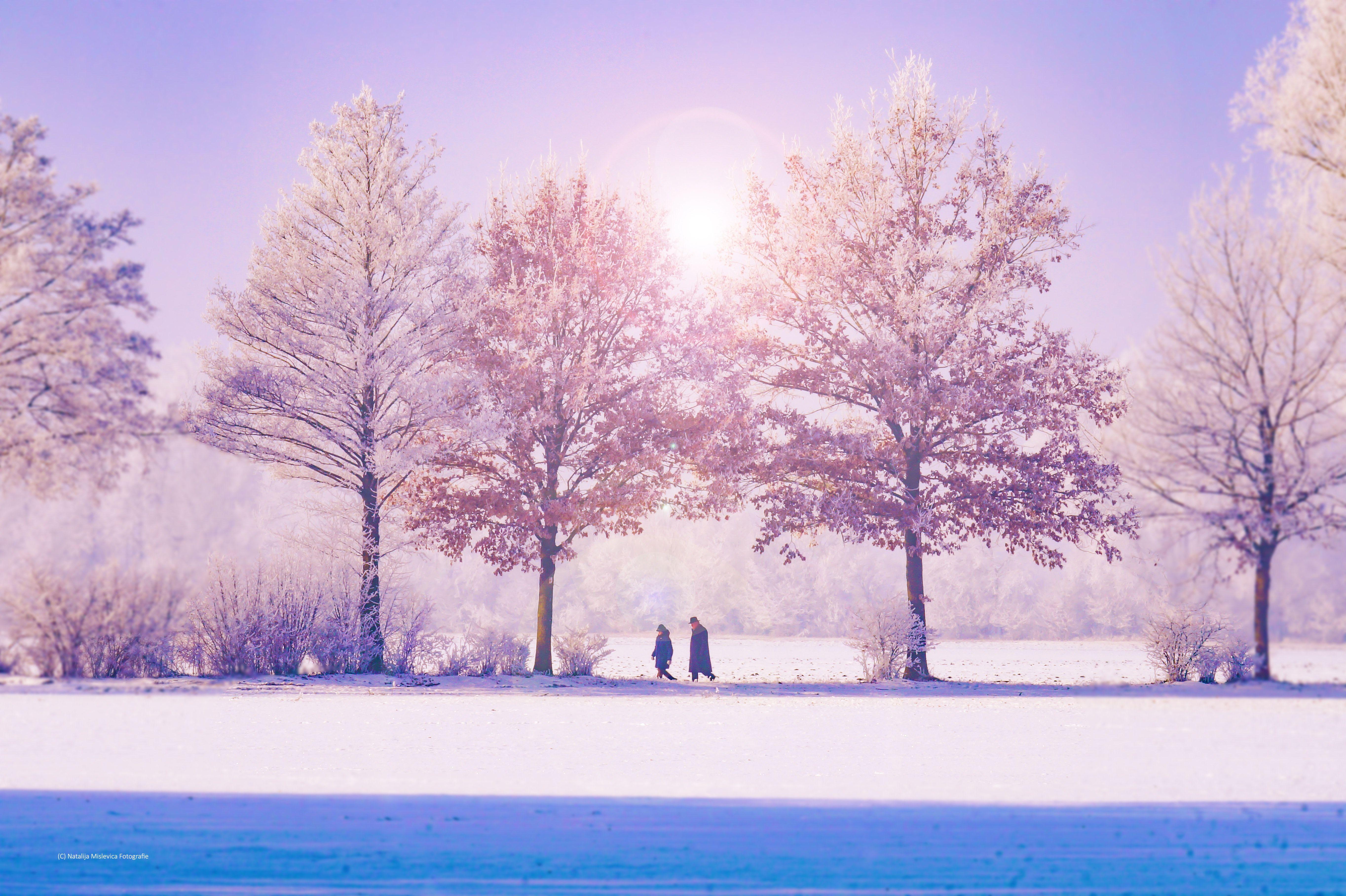 Pin By Julia Akter On Winter Nature Winter Wallpaper Winter Landscape Winter Trees