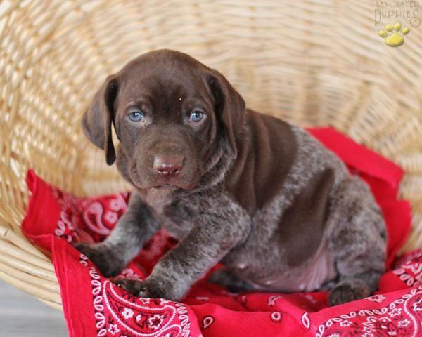 Most Inspiring Australia Chubby Adorable Dog - ff7ba8d927a23a1d82b69e5d5c155067  Snapshot_103319  .jpg