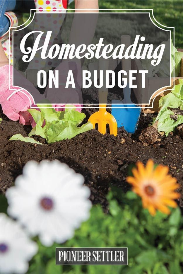 How to Start Homesteading on a Budget | Homesteading DIY ...